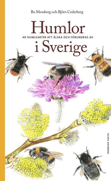 bokomslag Humlor i Sverige : 40 arter att älska och förundras över