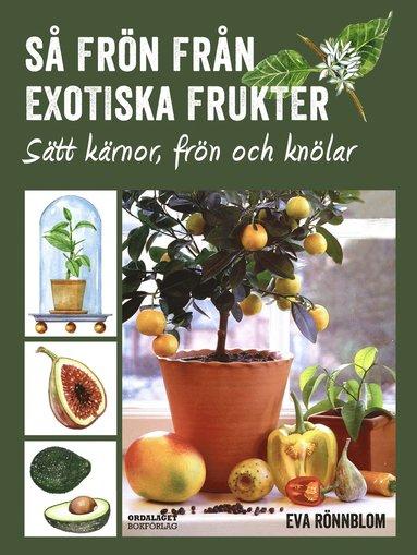 bokomslag Så frön från exotiska frukter - sätt kärnor, frön och knölar
