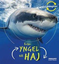 bokomslag Från yngel till haj