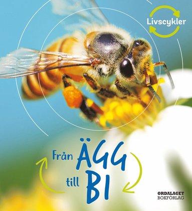 bokomslag Från ägg till bi