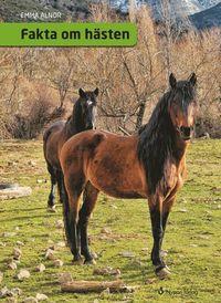 bokomslag Fakta om hästen