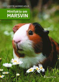 bokomslag Minifakta om marsvin