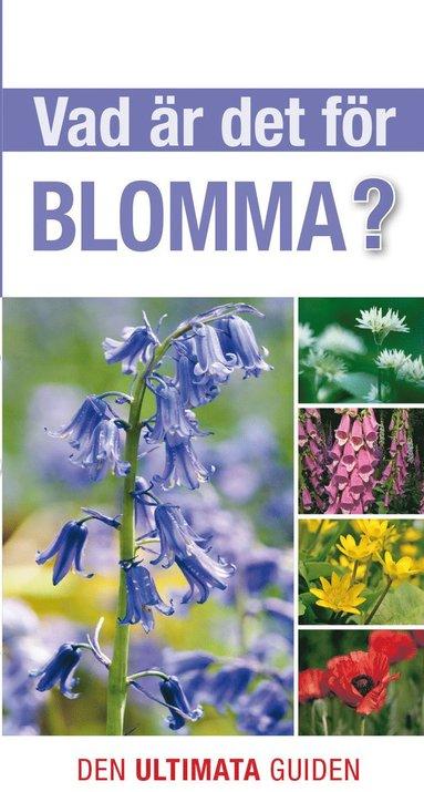 bokomslag Vad är det för blomma?
