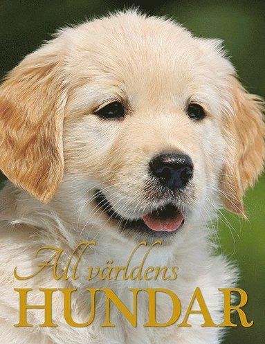 bokomslag All världens hundar