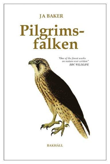 bokomslag Pilgrimsfalken