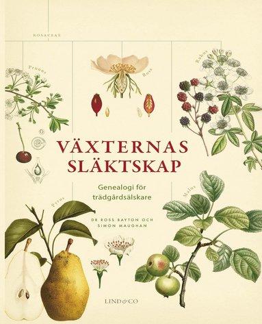 bokomslag Växternas släktskap - Genealogi för trädgårdsälskare