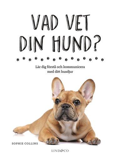 bokomslag Vad vet din hund? : lär dig förstå och kommunicera med ditt husdjur