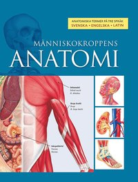 bokomslag Människokroppens anatomi