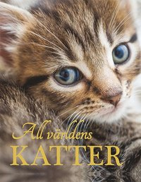 bokomslag All världens katter