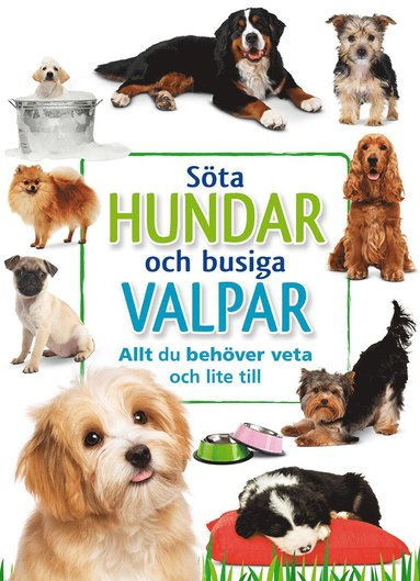 bokomslag Söta hundar och busiga valpar: allt du behöver veta och lite till