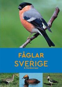 bokomslag Fåglar i Sverige & Nordeuropa