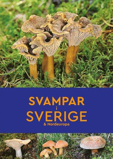 bokomslag Svampar i Sverige & Nordeuropa