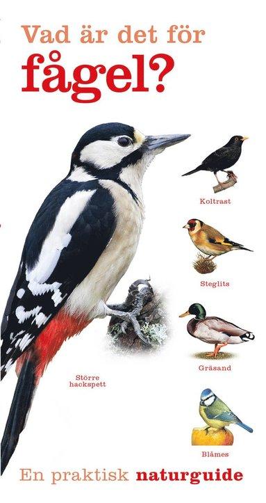 bokomslag Vad är det för fågel?