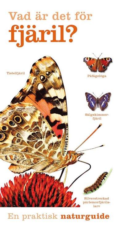 bokomslag Vad är det för fjäril?