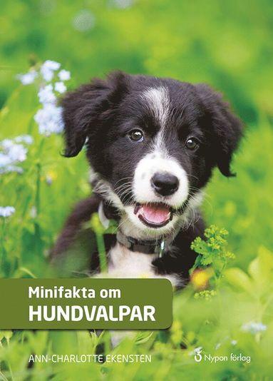 bokomslag Minifakta om hundvalpar