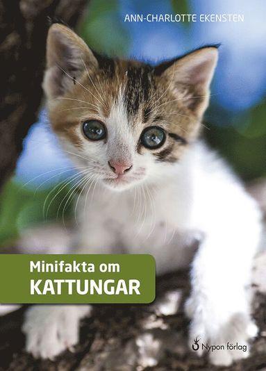 bokomslag Minifakta om kattungar