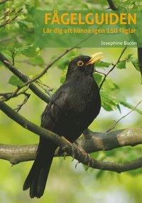 bokomslag Fågelguiden: lär dig känna igen 150 fåglar