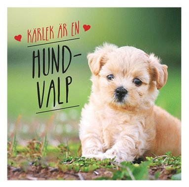 bokomslag Kärlek är en hundvalp