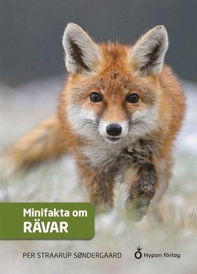 bokomslag Minifakta om rävar
