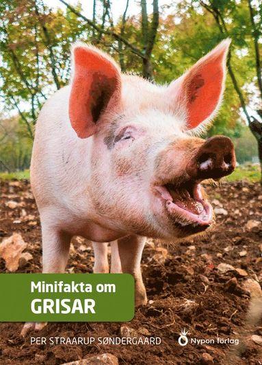 bokomslag Minifakta om grisar