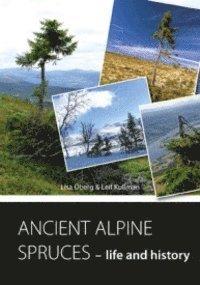 bokomslag ANCIENT ALPINE SPRUCES - life and history