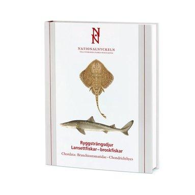 bokomslag Ryggsträngsdjur : lansettfiskar-broskfiskar - Chordata : branchiostomatidae-chondrichthyes