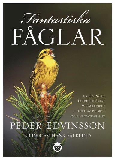 bokomslag Fantastiska fåglar