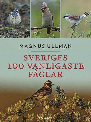 bokomslag Sveriges 100 vanligaste fåglar