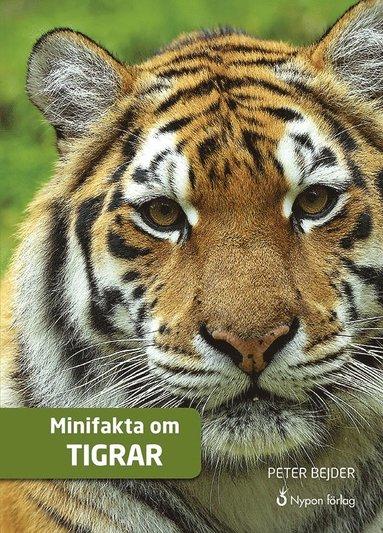 bokomslag Minifakta om tigrar (CD + bok)