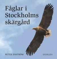 bokomslag Fåglar i Stockholms skärgård