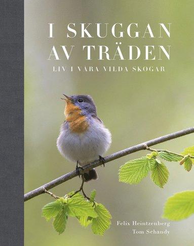 bokomslag I Skuggan av träden : liv i våra vilda skogar