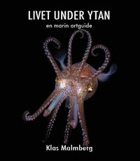 bokomslag Livet under ytan - en marin artguide